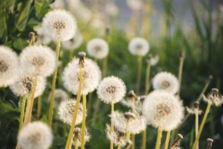 broadleaf herbicide